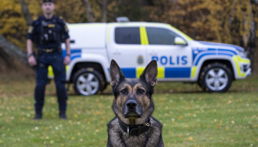 Schäfern Izor- Årets polishund 2020